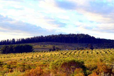 Venta  Maldonado Cerro Pan de Azúcar